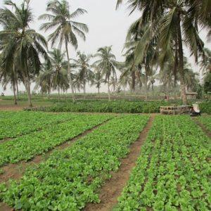 Stratégie d'aménagement d'une BlueZone agricole